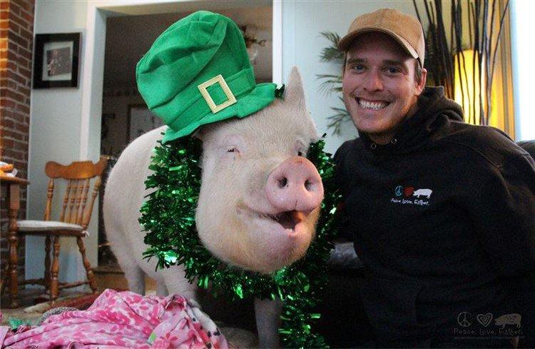 man pig hat