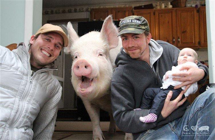 men baby pig