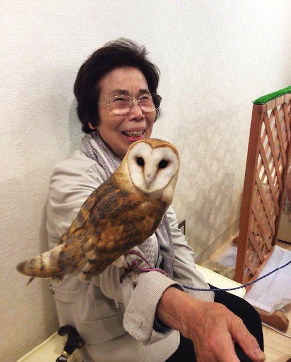 owl-face