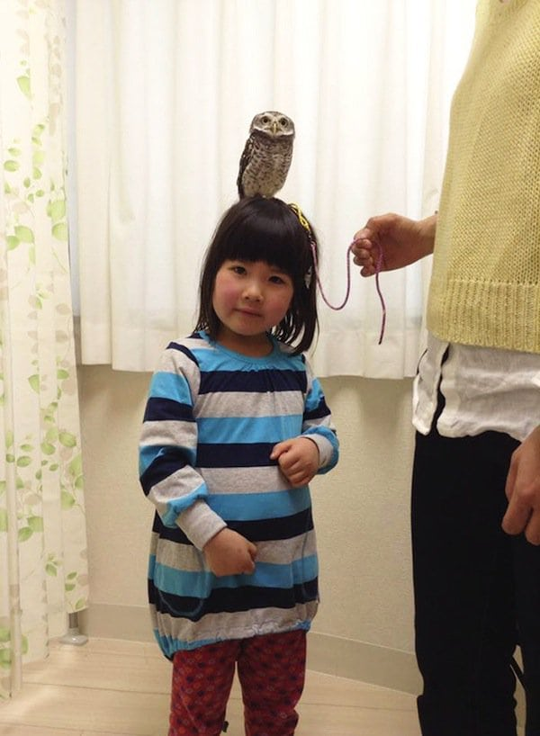 owl-girl-head