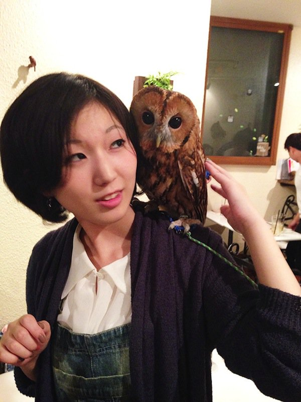 owl-shoulder