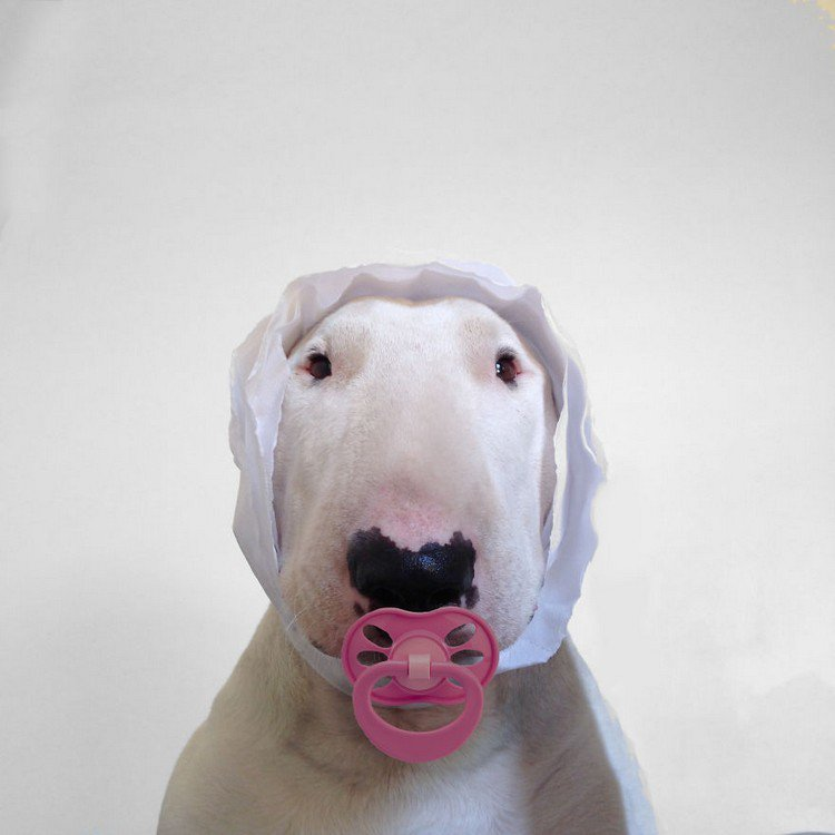 pacifier dog