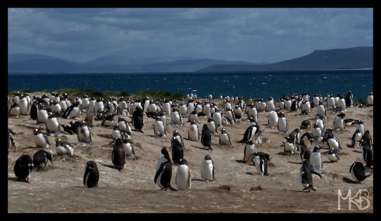 penguins-last