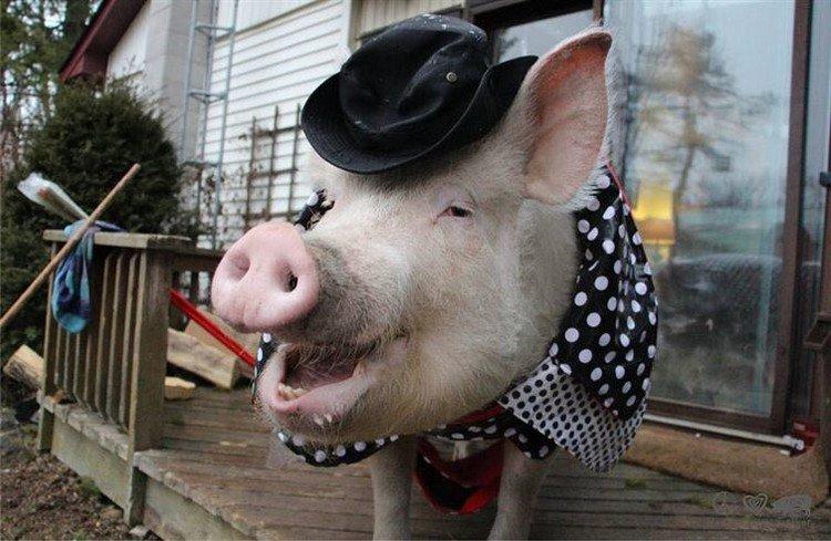 pig hat scarf