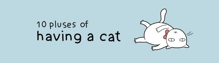 pluses cat