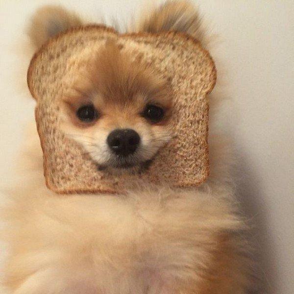 pom bread face
