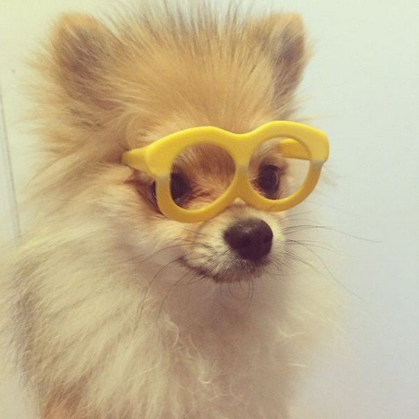 pom glasses