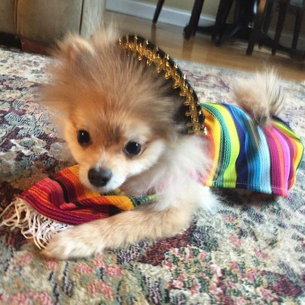 pom mexican outfit