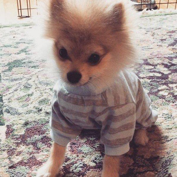 pom stripy pajamas