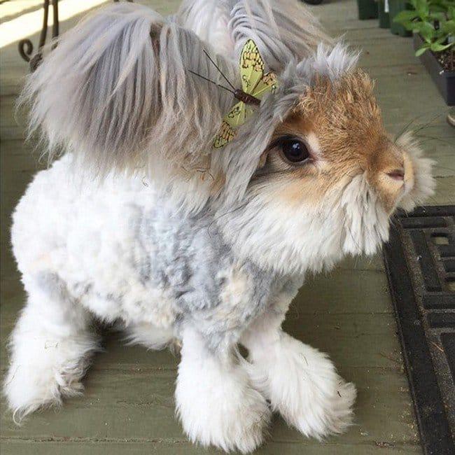 rabbit butterfly head
