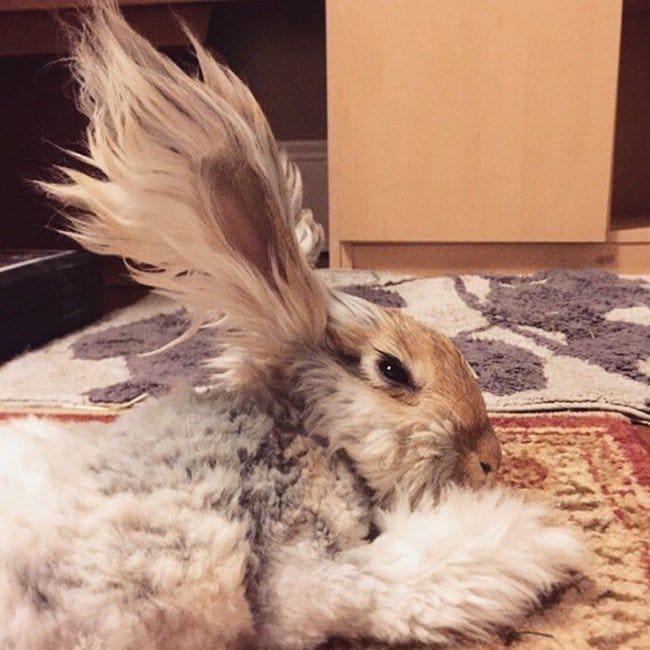 Meet Wally The Rabbit With Ears Like Angel Wings