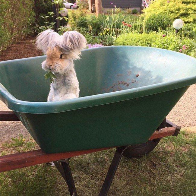 rabbit wheelbarrow