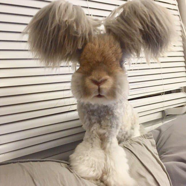 rabbit wing ears