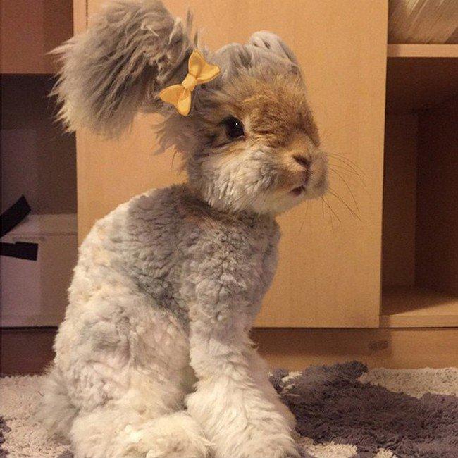 rabbit yellow bow