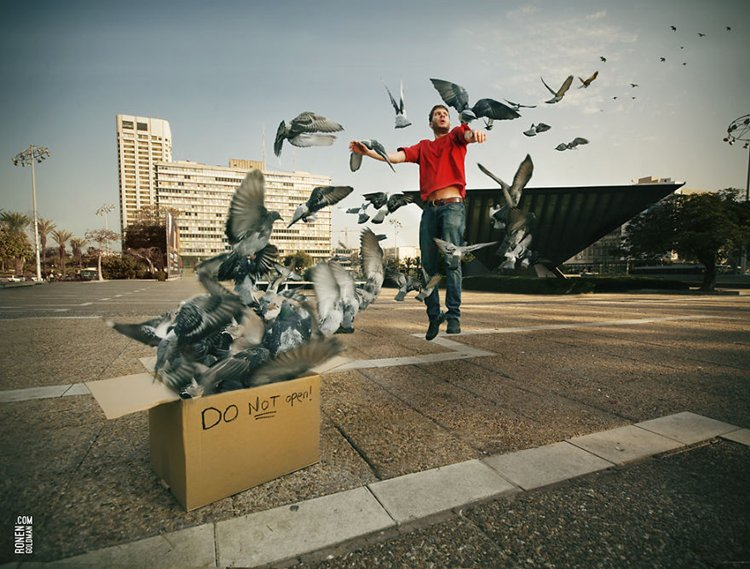 ronen-goldman-pigeons