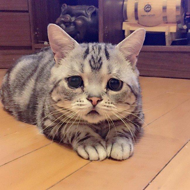 Meet Luhu The Saddest Cat On The Internet