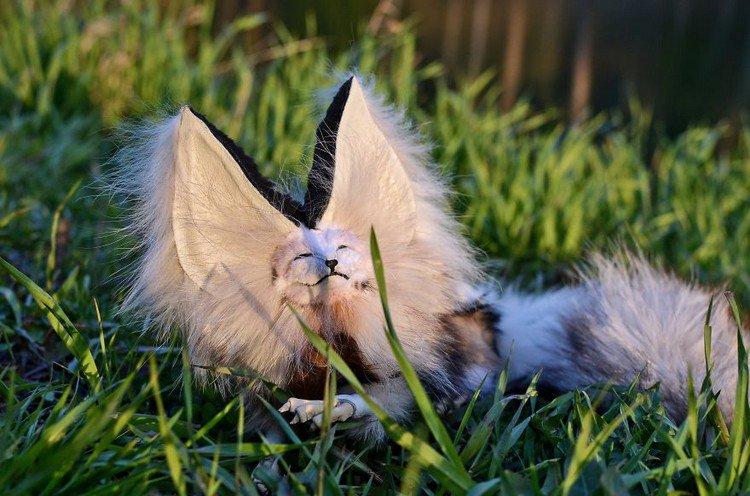 sleepard furry