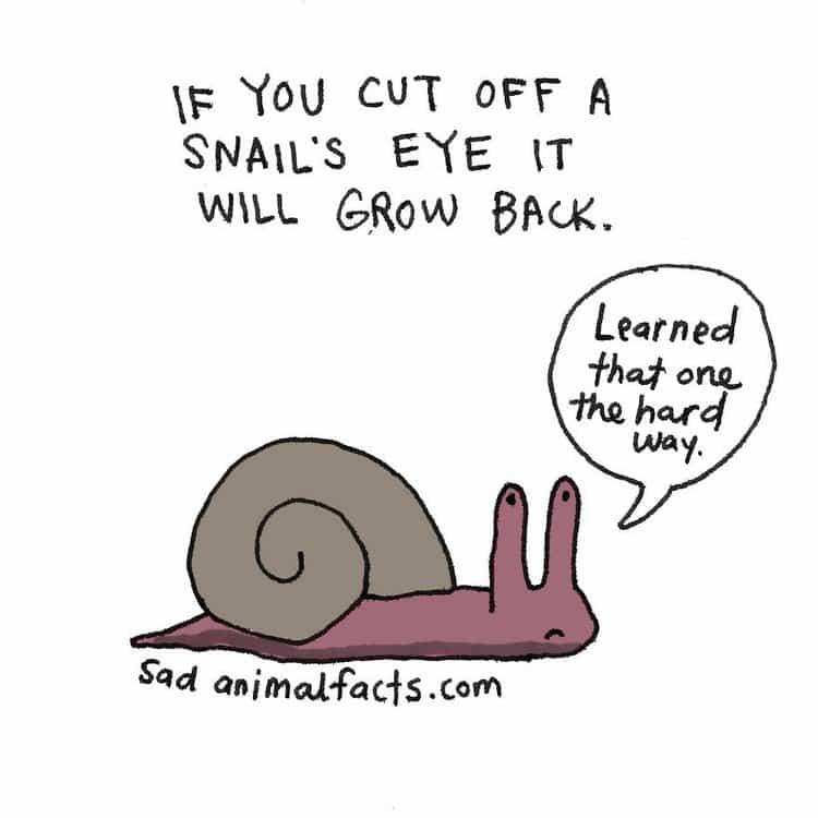 snail fact