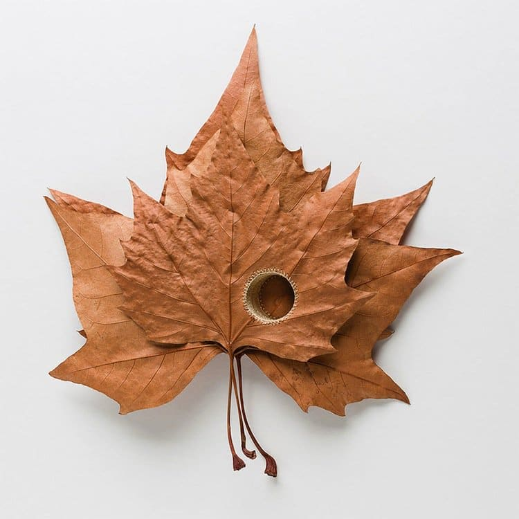 susanna-leaf