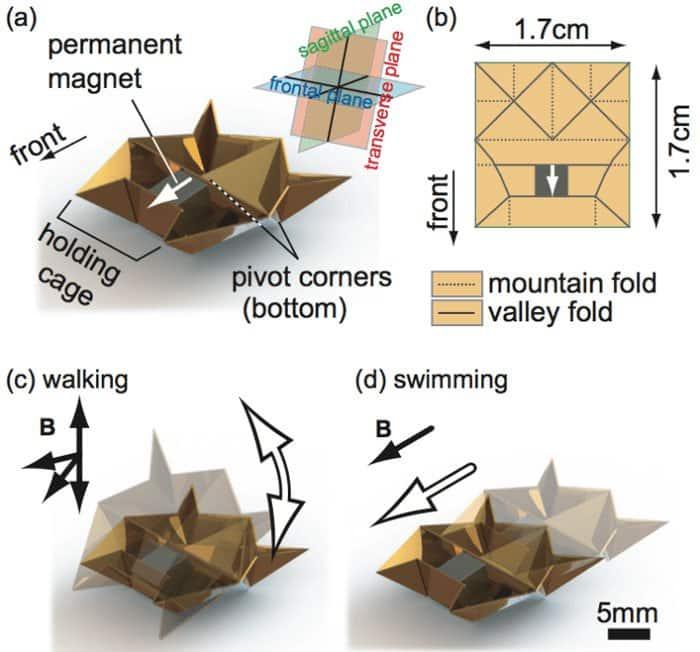 swimming walking robot