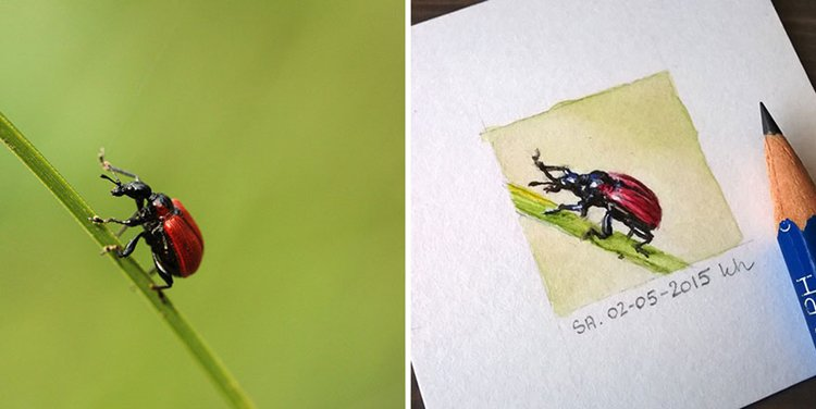 tiny-spring-illustrations-kasia-haldas-bug