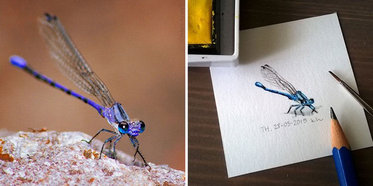 tiny-spring-illustrations-kasia-haldas-dragonfly