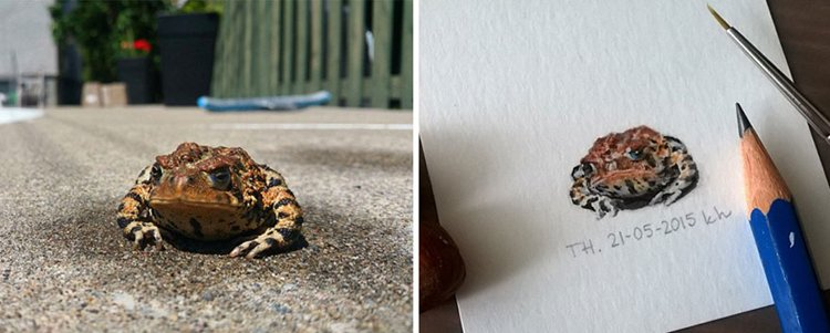 tiny-spring-illustrations-kasia-haldas-toad