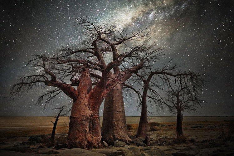 trees-big