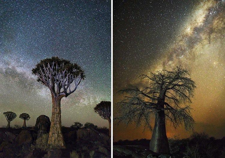 trees-double