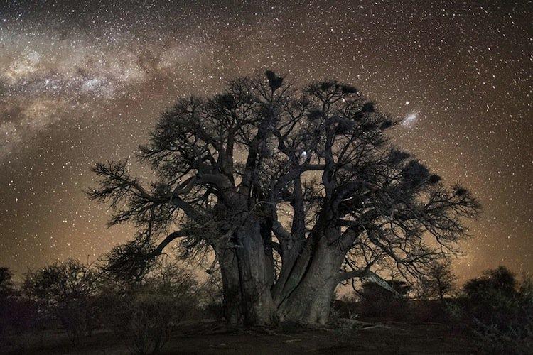 trees-grey