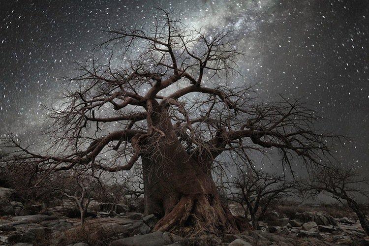 trees-moon