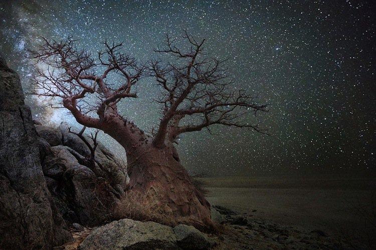 trees-starlight