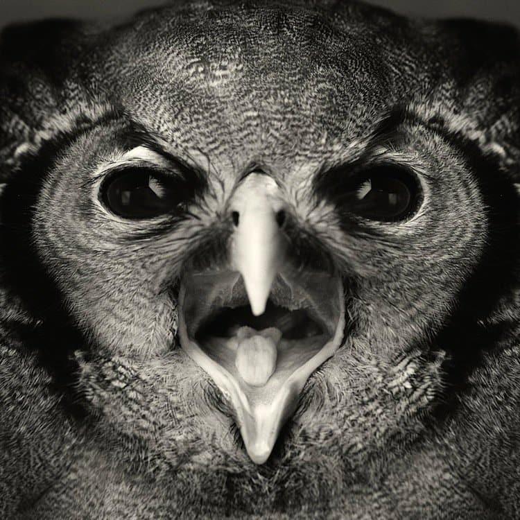 vincent-bird