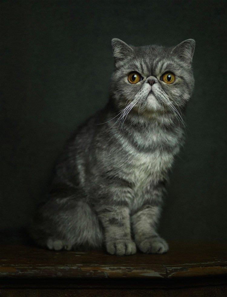 vincent-cat