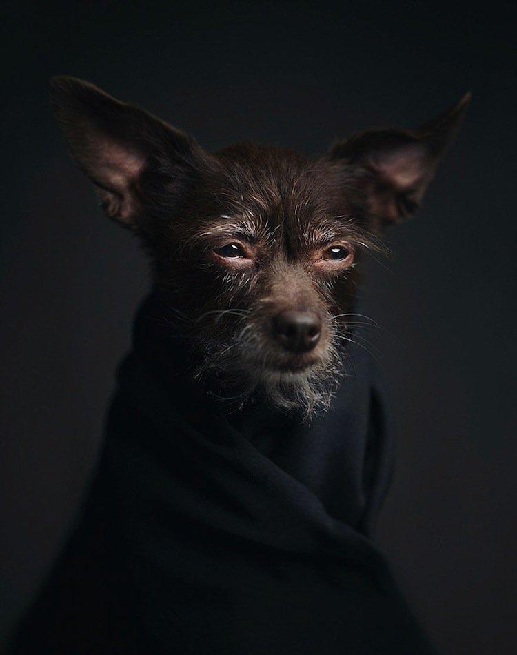 vincent-dog