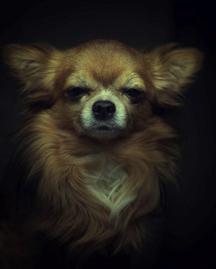 vincent-pup