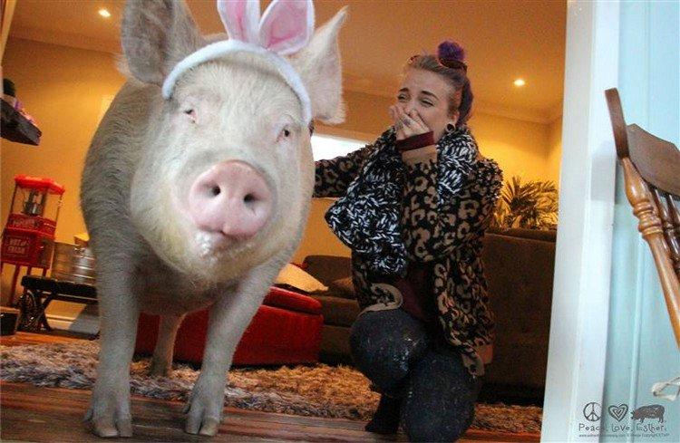 woman pig