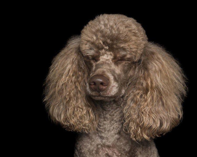 zen-dog-fluff