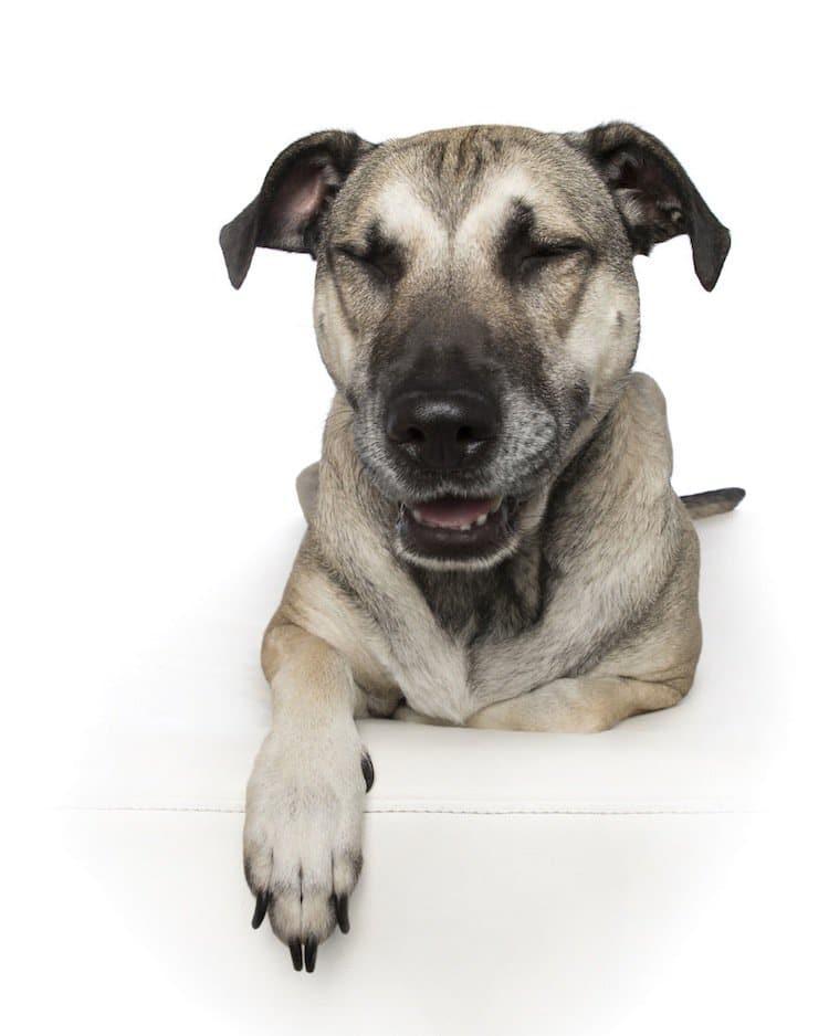 zen-dog-grey