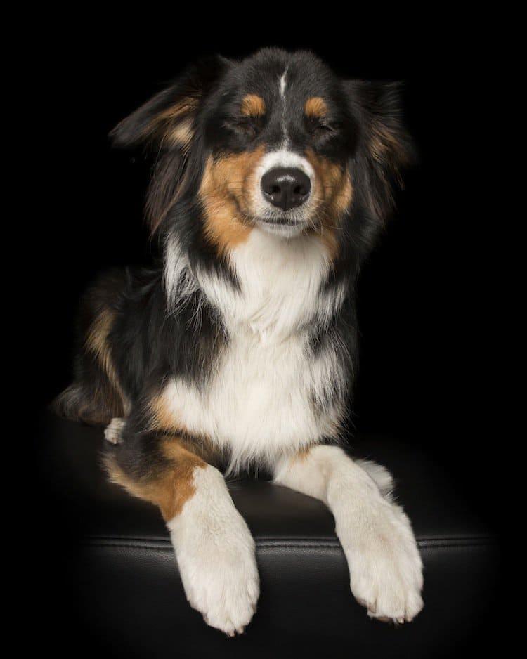 zen-dog-pooch