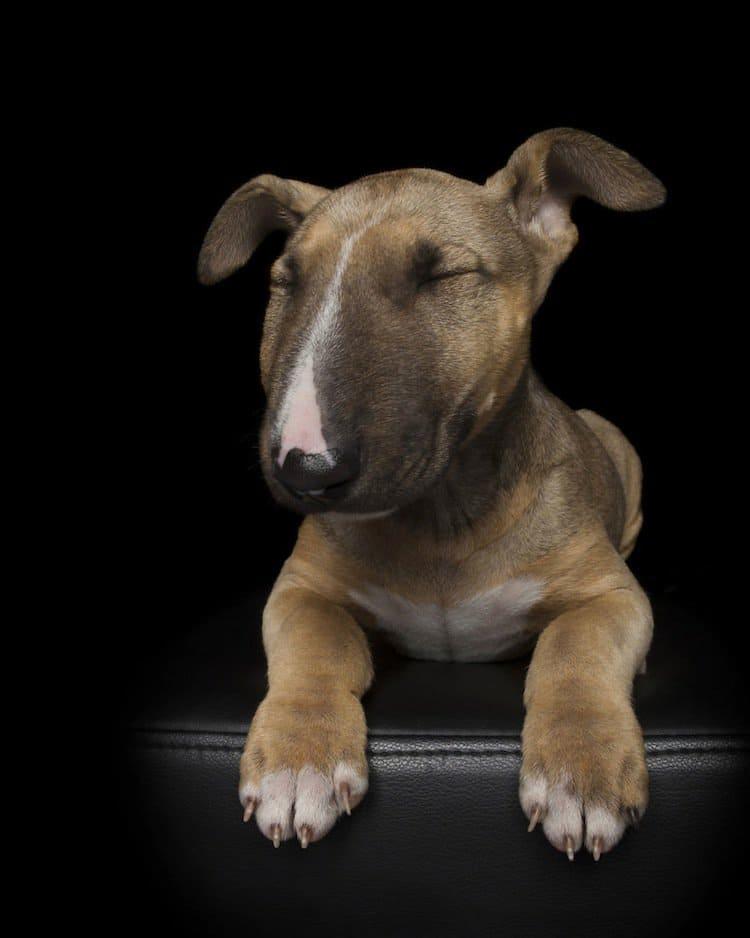 zen-dog-puppy