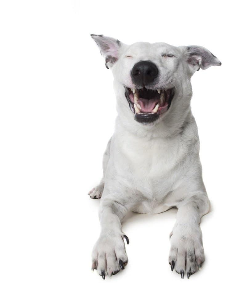 zen-dog-white