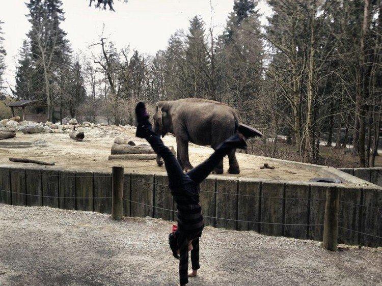 zoo handstand
