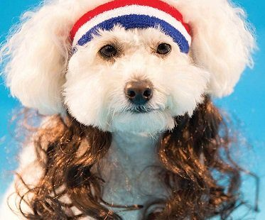 Dog Headband With Hair Extensions