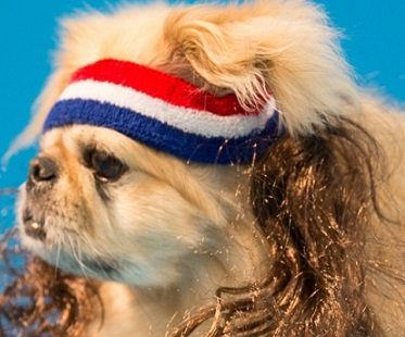 Dog Headband With Hair Extensions mullet