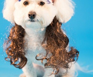 Dog Headband With Hair Extensions pet