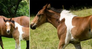 Foal Born With Horse-Shaped Marking