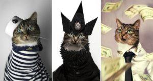 Hummus The Fashion Icon Cat