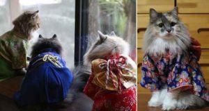 Kimono Wearing Kitties