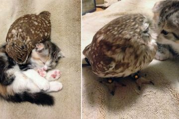 Kitten And Owlet Friendship